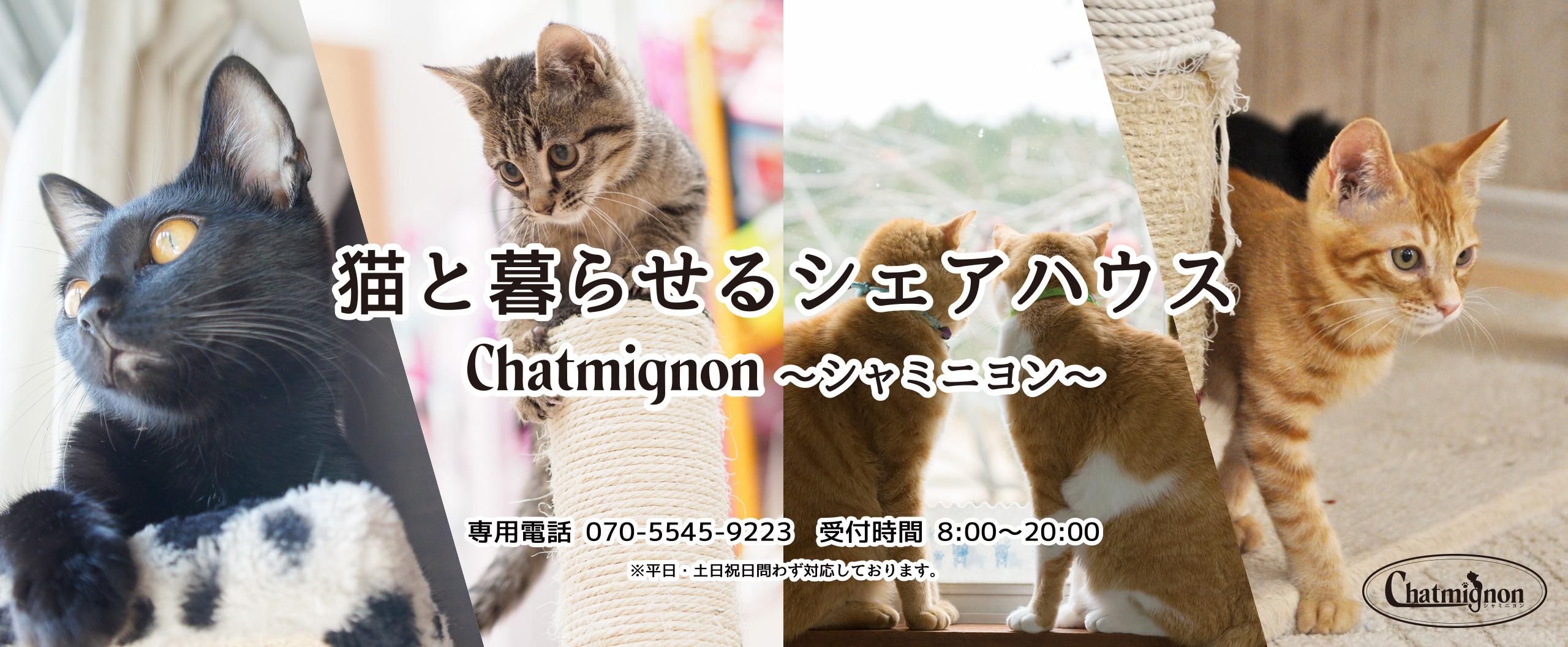 猫と暮らせるシェアハウス